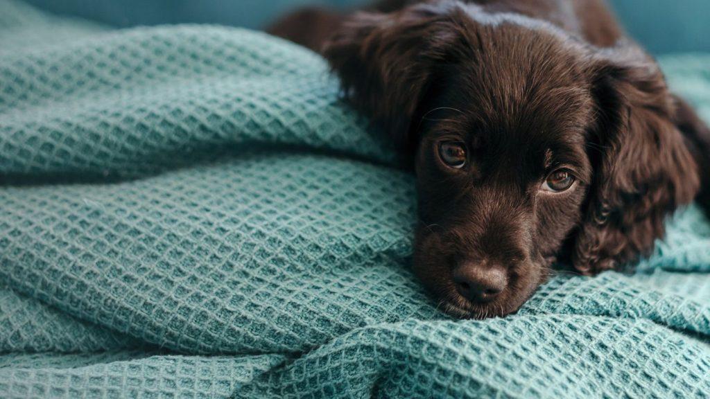 پارچه ی مناسب برای سگ